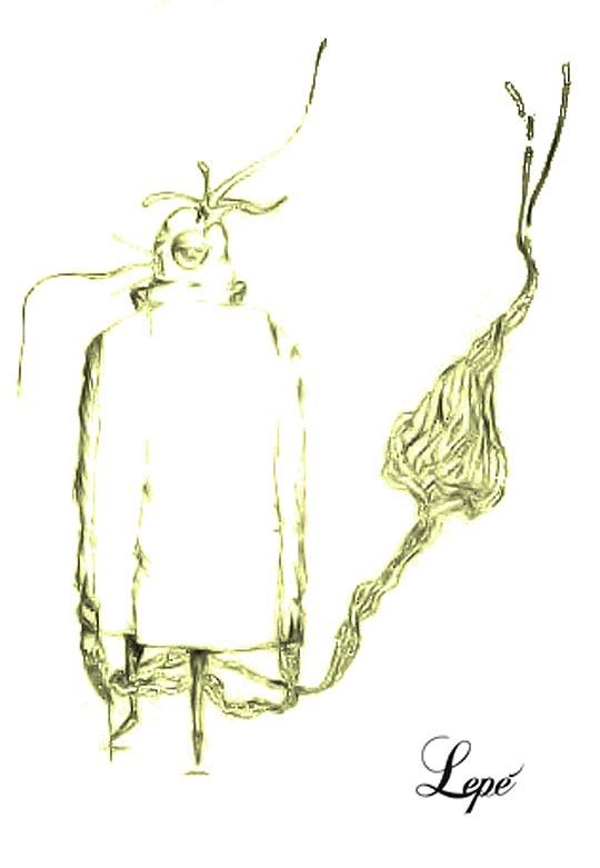 Ilustración de PEPE TZINTZUN aka Pepe.