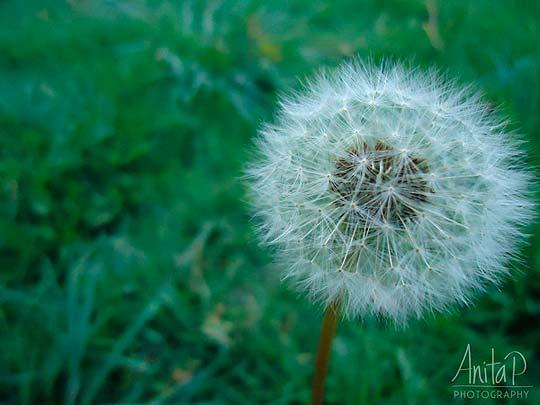 Fotografía de ANA PEÑA Aka Anitap