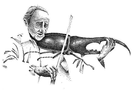 Violinista de SILVIA RODAS Aka Unacigarramas.