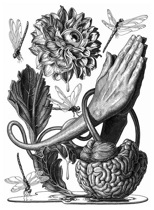 Dibujo en tinta de OLIVIA KNAPP