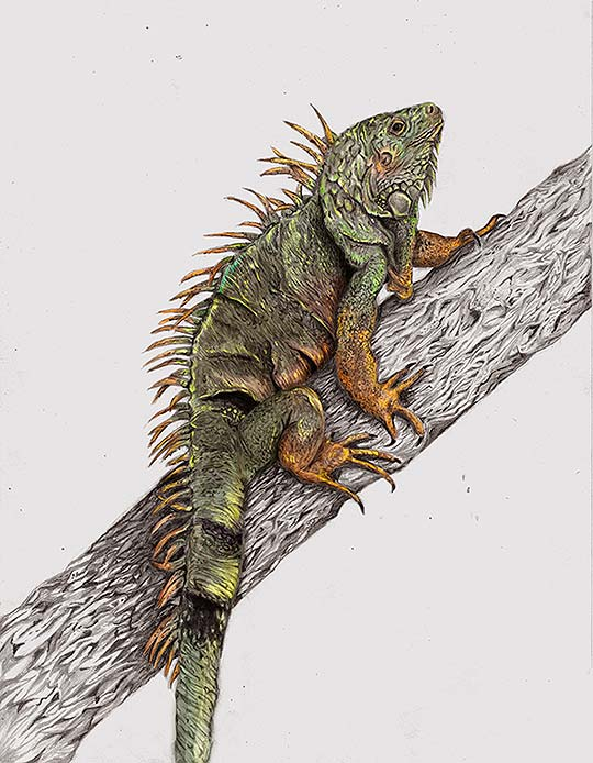 Ilustración de Ricardo Macía Lalinde